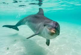 delfin22